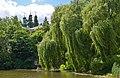 Верхнє озеро-ставок з Китаївського каскаду, Голосіївський район вул. Китаївська, 15.jpg