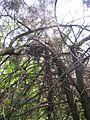 Дендрологічний парк 121.jpg