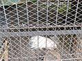 Дикобраз (Penza Zoo 2016).jpg
