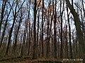 Еталонна діброва Вінницьке лісництво 6.jpg