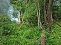 Заболочений ліс в Цуманській Пущі - panoramio.jpg
