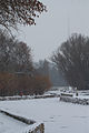 Зимовий дендропарк.jpg