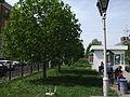 Каштанова алея 03.JPG