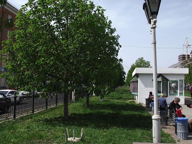 File:Каштанова алея 03.JPG