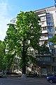 Каштан Іващенко DSC 0770.jpg