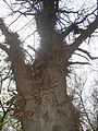 Колючее дерево в парке.jpg