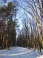 Лісова дорога, Бучач.jpg