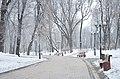 Маріїнський парк взимку 01.jpg