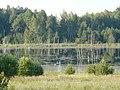 Облюбленная рыбаками болотина с бычками-ротанами - panoramio.jpg