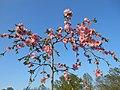 Одеса, Ботанічний сад, Французький бульвар 04-2018 07.jpg