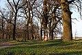 Орлівщанські дубові насадження-3.jpg