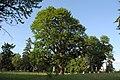 Парк в селі Лука-Мелешківська DSC 4106.JPG