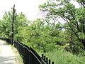 Парк шума Гази Баба во мај (27).JPG