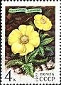 Почтовая марка СССР № 4698. 1977. Цветы гор Сибири.jpg