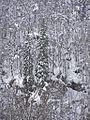 Р.Инзер 1761 км. - panoramio.jpg