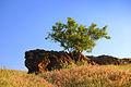 Скала и дерево. МОПР.jpg