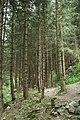 Сосновый лес (Медвежье ущелье) - panoramio.jpg