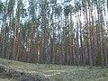 Сплав - panoramio (8).jpg
