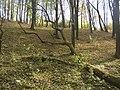 Украина, Киев - Голосеевский лес 52.jpg