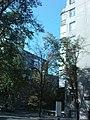 Україна, Харків, вул. Гіршмана, 17 фото 7.JPG