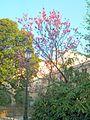 Цветущие деревья - panoramio.jpg