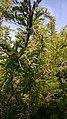 جمال منالطبيعة لصورة نبات شوكي.jpg