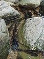 อุทยานแห่งชาติน้ำตกพลิ้ว จ.จันทบุรี (17).jpg