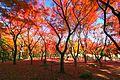 北の丸公園モミジ園 - panoramio (2).jpg