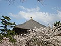 大仏殿桜に包まれて - panoramio.jpg