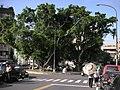 天母大樹與清早市集 - panoramio.jpg