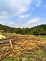 新丰司茅坪林场20150412 - panoramio (123).jpg