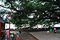 欢乐的码头 - panoramio.jpg