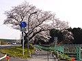 水源公園 - panoramio - gundam2345 (4).jpg