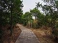 状元岭登山道 - Zhuangyuan Ridge Trail - 2014.08 - panoramio (2).jpg
