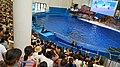 福建长泰天柱山欢乐大世界 海豚剧场-海豚表演 04.jpg