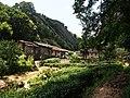 竹巢茶场 - Zhuchao Tea Farm - 2015.08 - panoramio.jpg