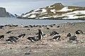 00 2002 Antarktis, Shetland Archipel - Aitcho-Inseln.jpg