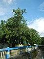01605jfBarangays Malinao San Nicolas Tomas Cruz Avenues Pasig Cityfvf 13.jpg