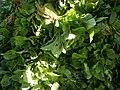 0251jfPanoramics Pulilan Fields Plants Philippinesfvf 32.JPG