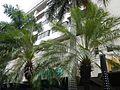 04948jfStreets Adriatico Harrison Plaza SM Century Park Buildings Malate Manilafvf 04.jpg