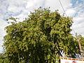 0516jfSaint John Bananas School Roads Sucol Calumpit Bulacanfvf 02.JPG