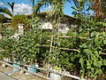 05537jfCabaducan East Beans Ambassador Village Nampicuan Nueva Ecijafvf 10.JPG