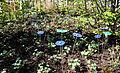 14-04-16 Zülpich Kunststoffblumen 01.jpg