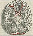 1543,Vesalius'Fabrica,VisualSystem,V1.jpg
