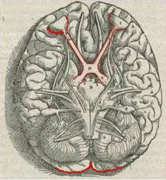 Visual system - Image: 1543,Vesalius'Fabric a,Visual System,V1