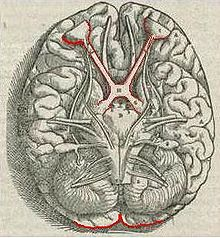 Visual system - Wikipedia, the free encyclopedia