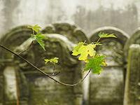 1734 cmentarz żydowski Ostrowiec Świętokrzyski 5.JPG