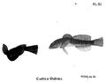 1847 BostonJournal NaturalHistory v5 illus6.png
