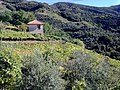 19018 Vernazza, Province of La Spezia, Italy - panoramio (23).jpg