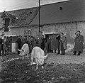 1958 visite d'une délégation INRA au Haras du Pin Cliché Jean Joseph Weber-56.jpg